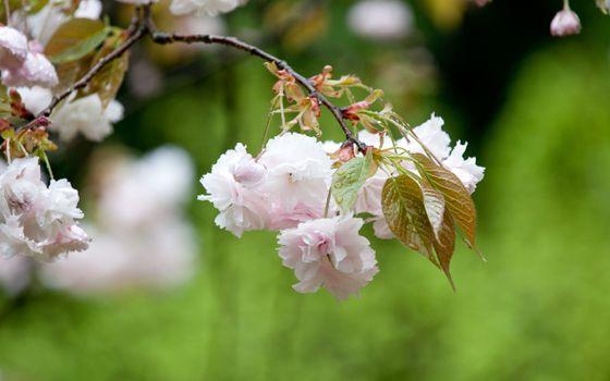 Заставки цветок, лепестки, тычинки, пестик, сердцевинка, красный, бардовый, цветы