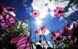 Фото бесплатно листья, зеленые, небо