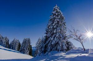 Бесплатные фото зима,снег,деревья,пейзаж