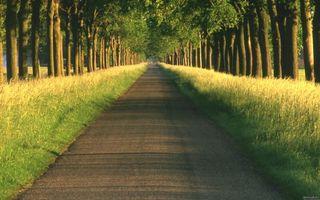 Фото бесплатно дорога, трава, тропа