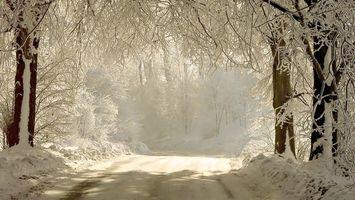 Бесплатные фото дорога,зима,снег,деревья,природа