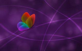 Фото бесплатно бабочка, крылья, цветные