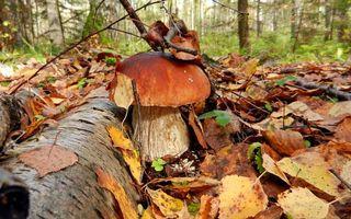 Фото бесплатно гриб, лес, листья