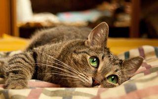 Заставки кот,кошка,усы,глаза,хвост,шерсть,мех