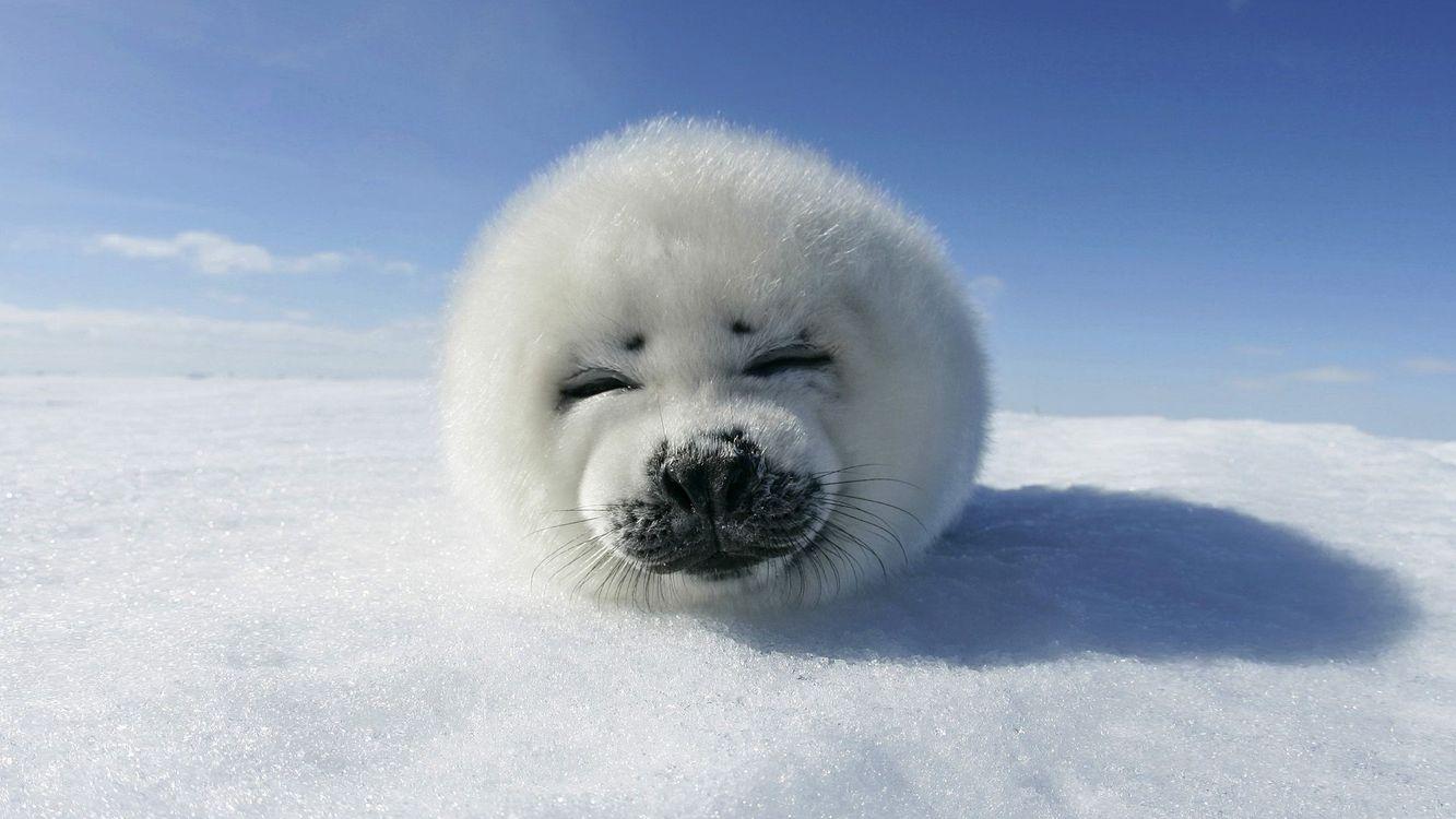 Фото бесплатно котик, зима, холод, небо, снег, тень, животные, природа, природа