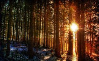 Фото бесплатно лес, деревья, стволы, солнце, лучи, свет, природа