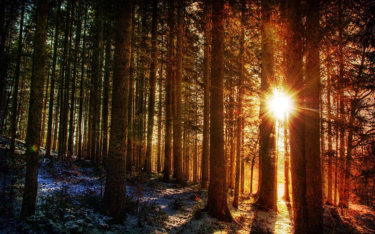 Фото бесплатно лес, деревья, стволы - на рабочий стол