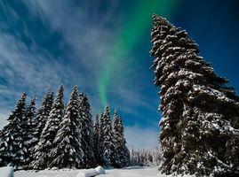 Бесплатные фото лес,северное сияние,елки,снег