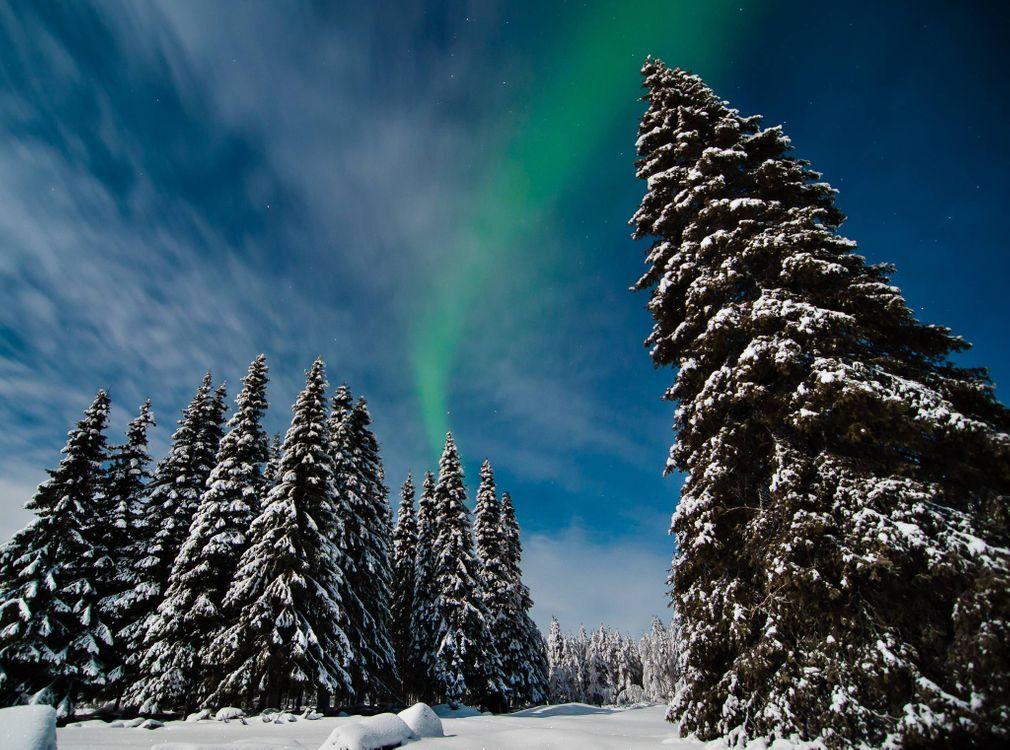 Фото бесплатно лес, северное сияние, елки, снег, природа
