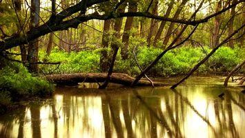 Бесплатные фото лес,вода,кусты,зеленые,свет,ветки,день