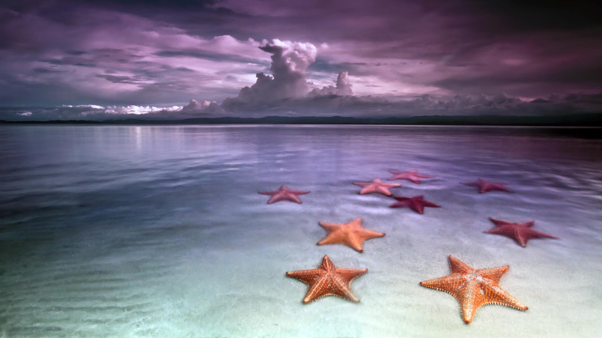 природа горизонт море морская звезда  № 623041 без смс