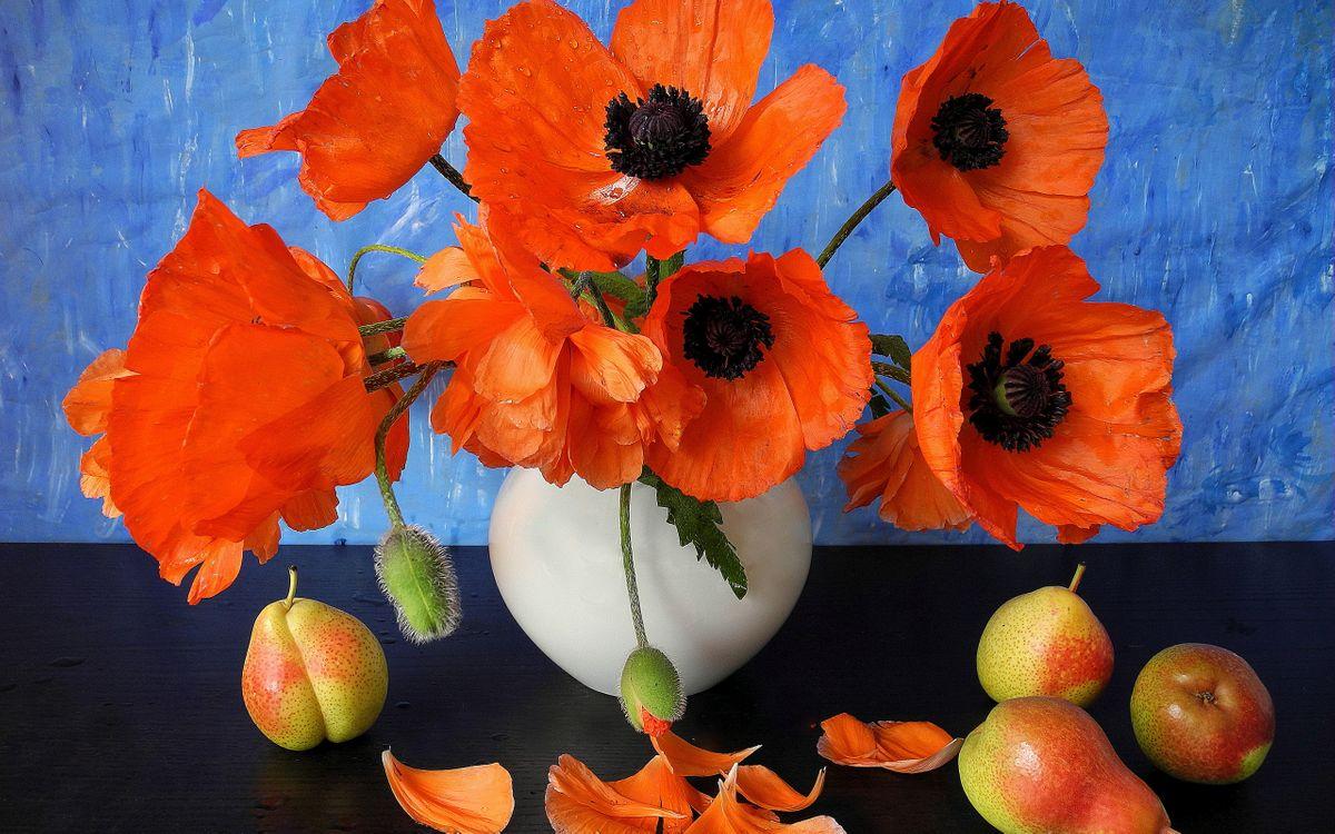 Фото бесплатно натюрморт, ваза, маки, красные, фрукты, груши, лепестки, цветы, цветы