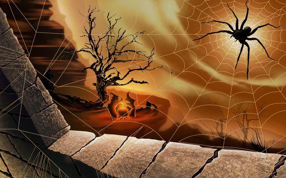 Бесплатные фото паук,паутина,окно,рисованная,обои,разное