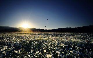 Фото бесплатно поле, цветы, восход, солнце, надувные, шарики, настроение, природа