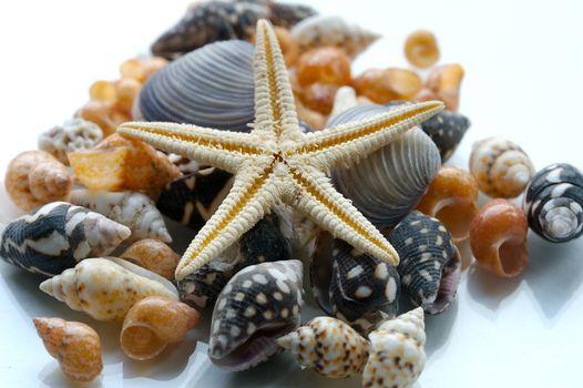 Фото бесплатно ракушки, морская звезда, макро