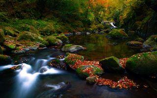 Бесплатные фото река,камни,мох,осень,листва,деревья,природа