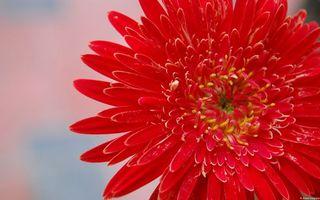 Фото бесплатно аромат, Красная, серая