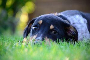 Фото бесплатно пес, грусть, трава