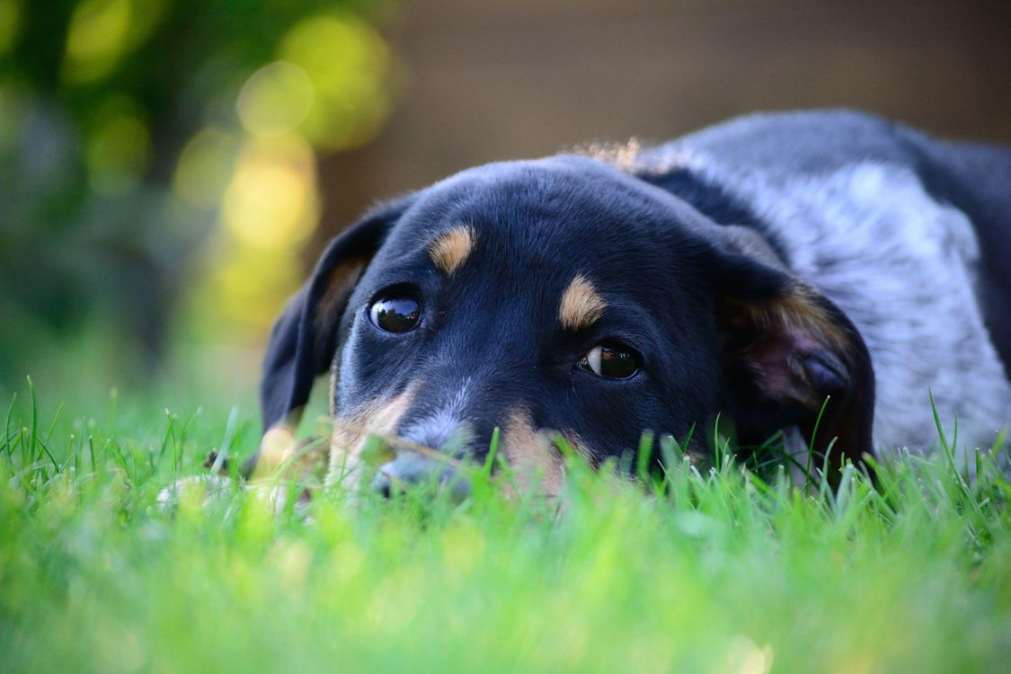 Фото бесплатно пес, грусть, трава - на рабочий стол