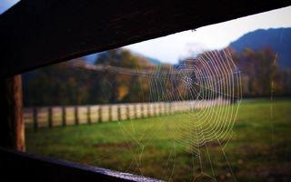 Фото бесплатно забор, паутина, узор