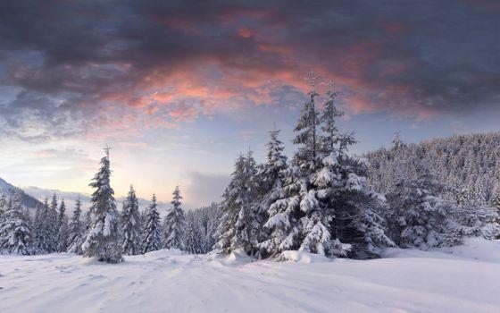 Фото бесплатно зимний рассвет, снег, сугробы, хвойные деревья, облака, зима, природа