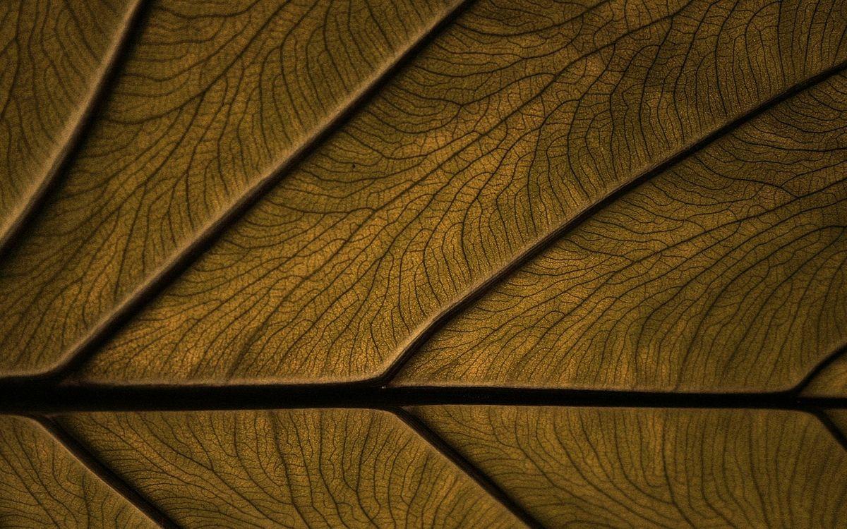 Фото бесплатно дерево, структура, узор, щели, изделие, заставка, текстуры, текстуры