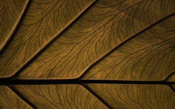 Photo free tree, structure, pattern