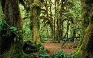 Photo free trunks, trees, tropics