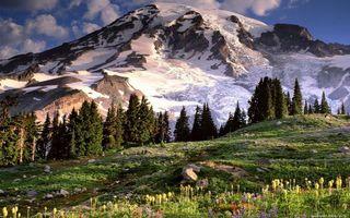 Бесплатные фото горы,снег,деревья,трава,камни,цветы,небо
