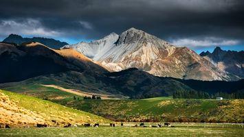 Фото бесплатно горы, трава, коровы
