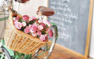 Фото бесплатно корзина, цветов, велосипед, школьная, доска, школа, цветы