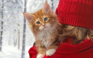 Фото бесплатно кот, девушка, шапка