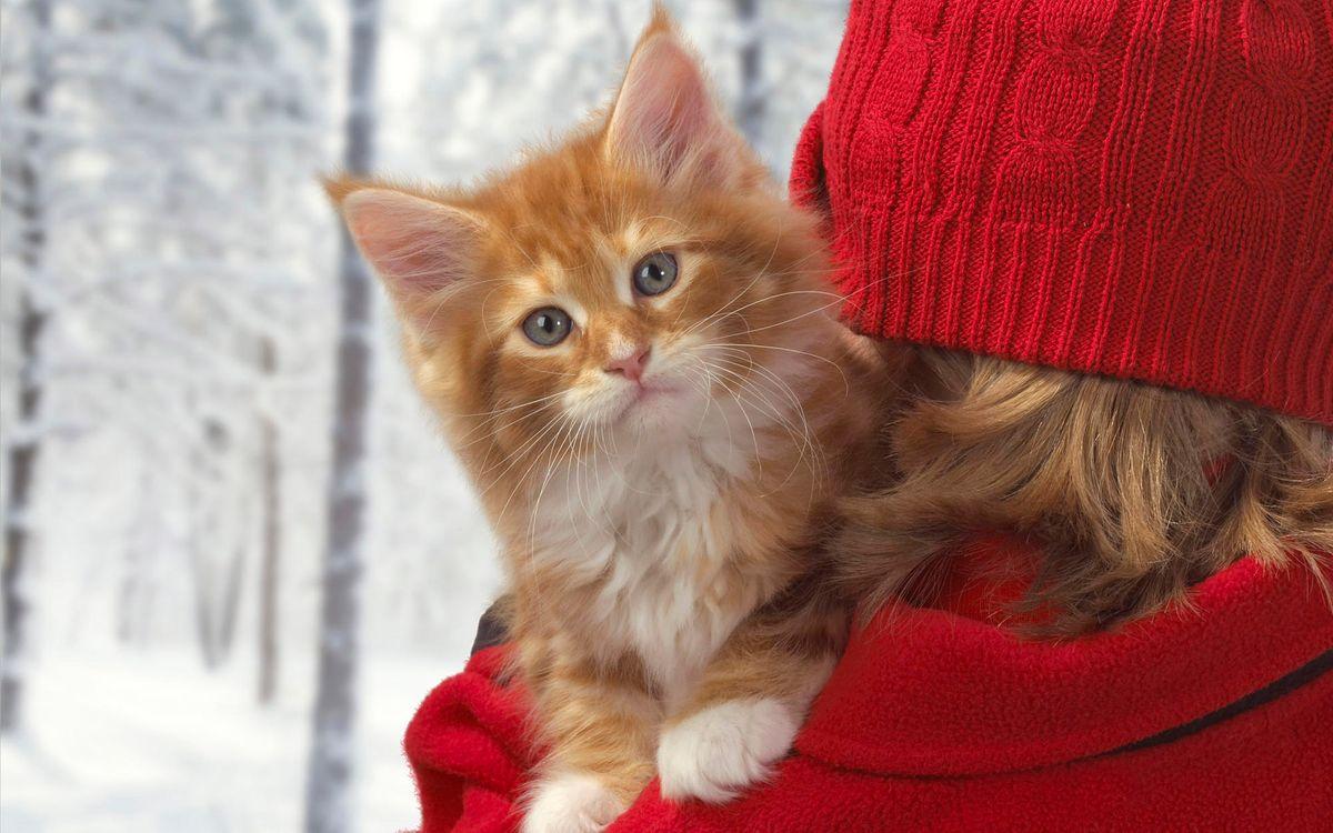 Фото бесплатно кот, девушка, шапка, красный, метель, снег, деревья, животные, кошки, кошки
