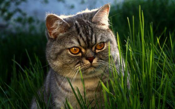 Фото бесплатно кот, толстый, пушистый