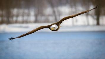 Бесплатные фото крылья,клюв,желтый,река,вода,деревья,птицы