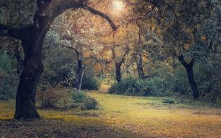 Фото бесплатно лес, деревья, кустарники, листва, трава, свет, солнце, природа