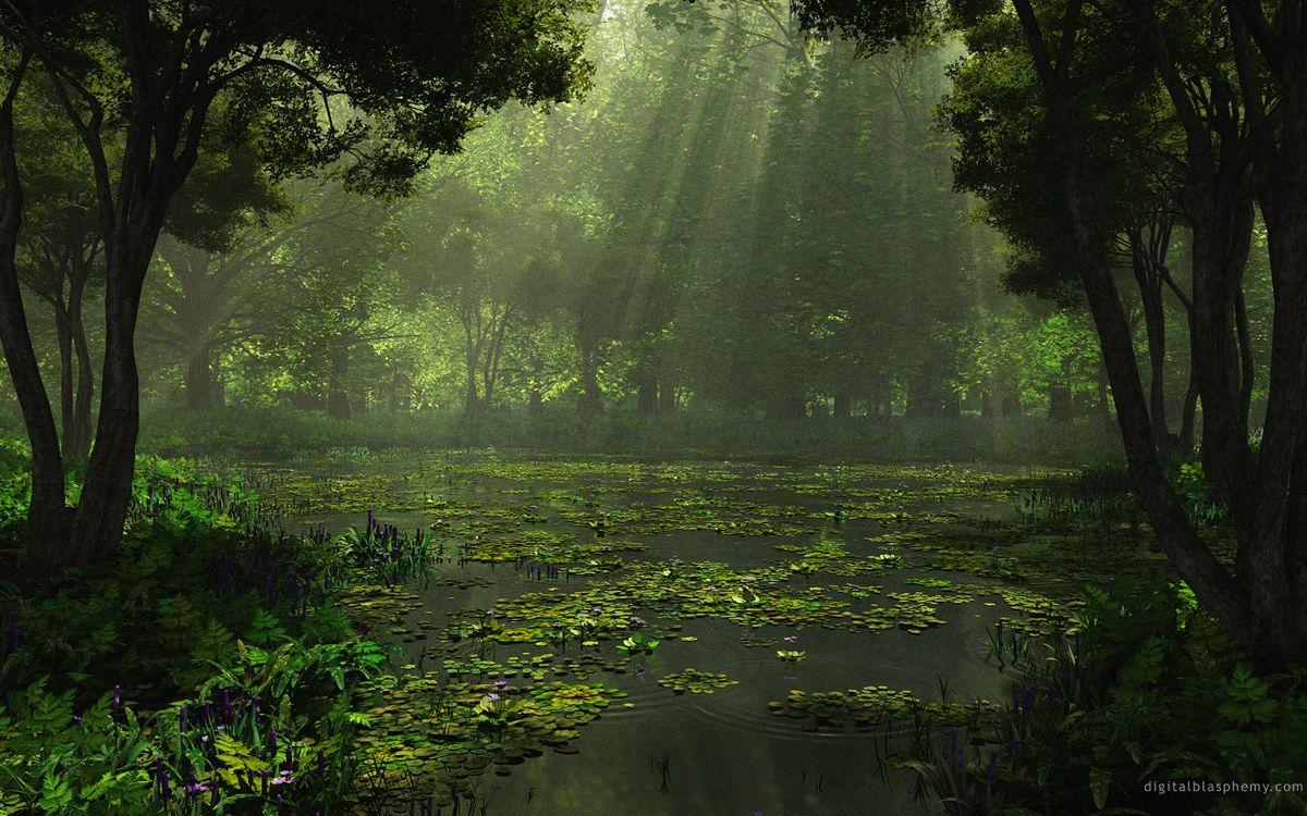 Фото бесплатно деревья, вода, свет - на рабочий стол