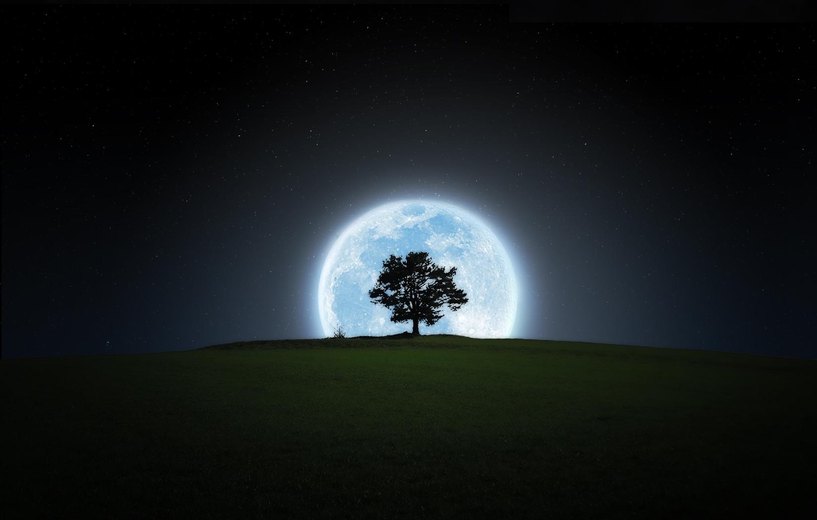 ночь, дерево, крона