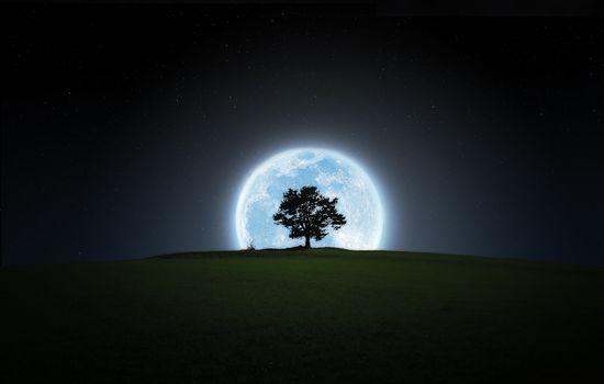 Фото бесплатно ночь, дерево, крона, луна, свет, пейзажи