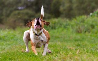 Заставки пес, щенок, прогулка
