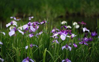 Бесплатные фото поле,цветы,лепестки,сереневые,трава,зеленая,природа