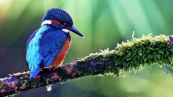 Бесплатные фото птичка,перья,крылья,ветка,мох,паутина,клюв