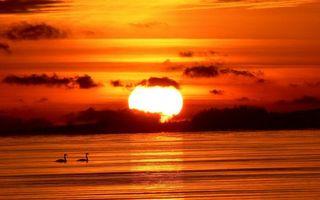 Бесплатные фото солнце,закат,красный,отражение,озеро,лебеди,пейзажи