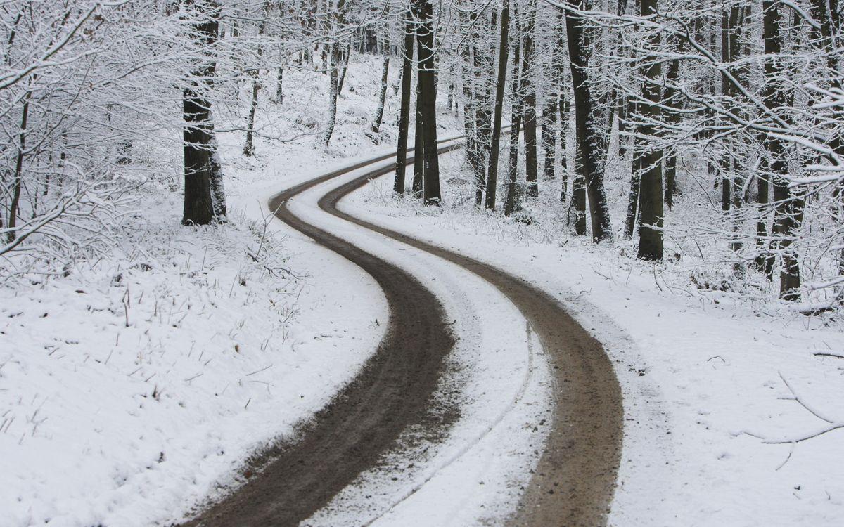 Фото бесплатно тропинка, снег, деревья, ветки, кора, песок, грязь, природа, пейзажи, пейзажи