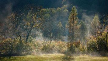Фото бесплатно утро, деревья, трава