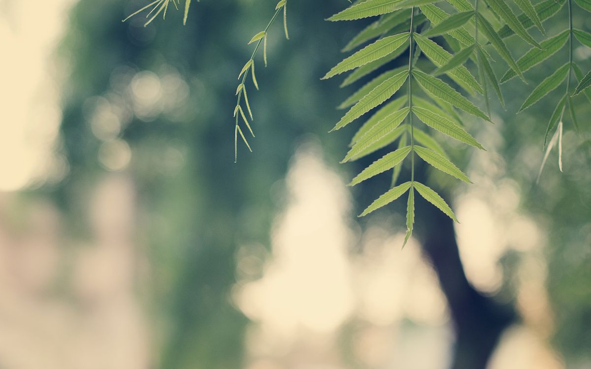 Фото бесплатно ветка, листья, дерево, фото, зелень, ветки, крона, лето, парк, лес, природа, природа