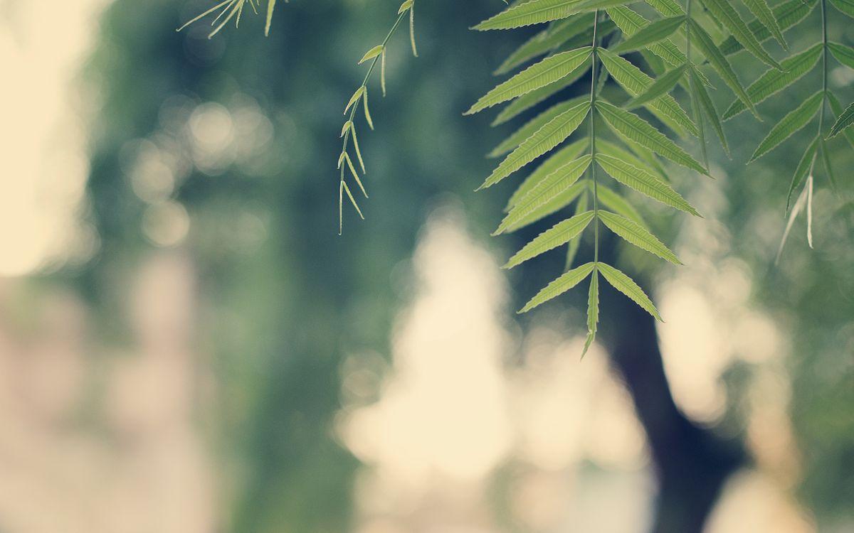Фото бесплатно ветки, лето, лес - на рабочий стол