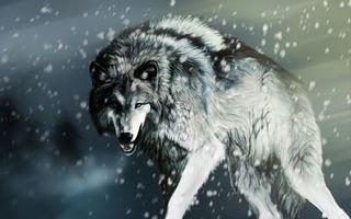 Фото бесплатно волк, снег, кровавые раны