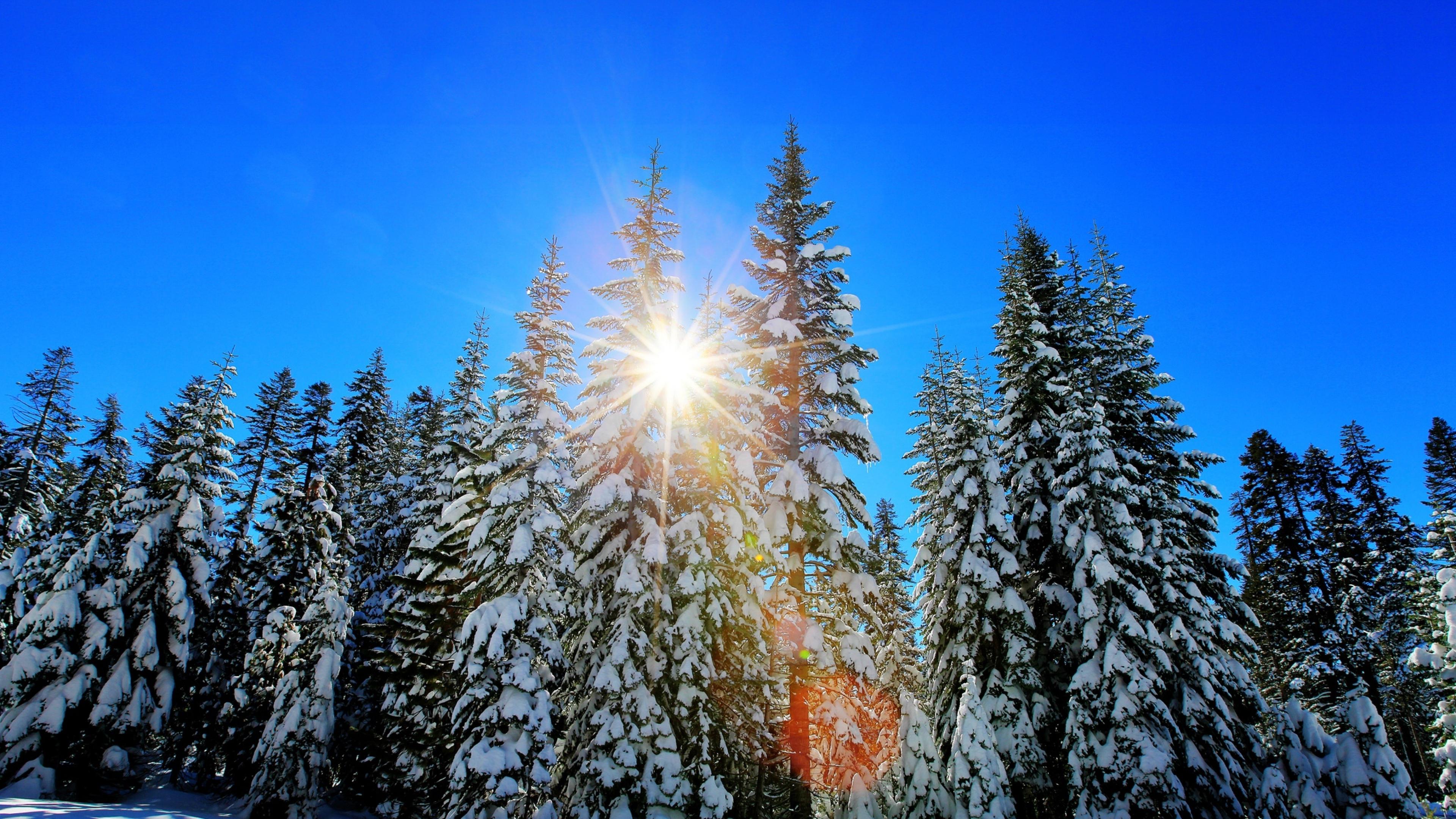 зимний солнечный лес  № 310403 бесплатно