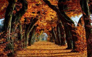 Бесплатные фото листья, осень, деревья
